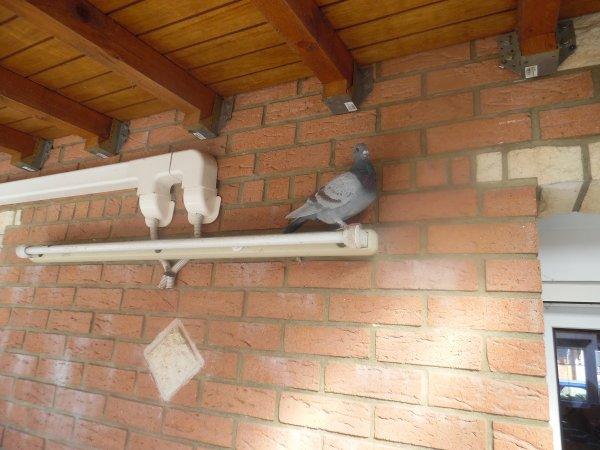"""Des Squatteurs """" mes pigeons"""""""