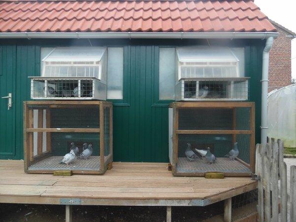 Installations de mes 2 petites volières // Agrandissement de ma pelouse