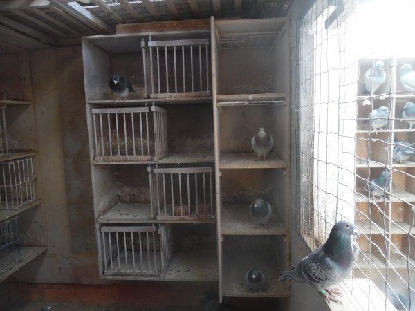Changement chez les repros de 30 casiers je passe a 20 cases