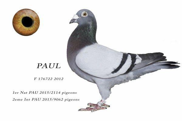 FR 2016-162322 : Soeur de Paul : 1er Nat & 2ème International Pau 2015