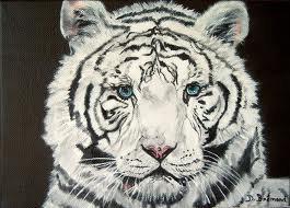 Le tigre blanc!