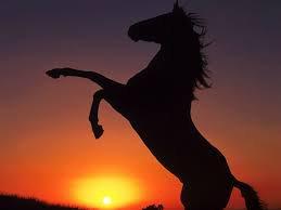 Le cheval!
