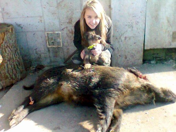 Sanglier de 75kg