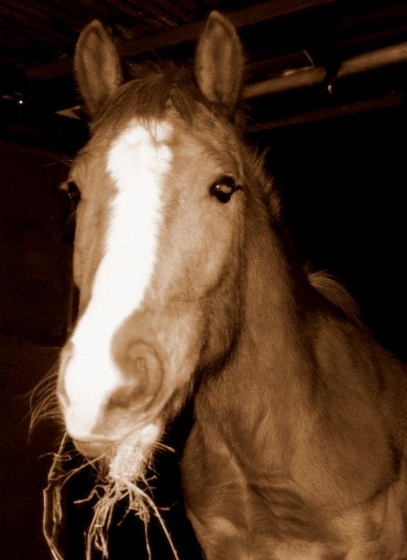 Mon beau poney, Roi des Poneys.