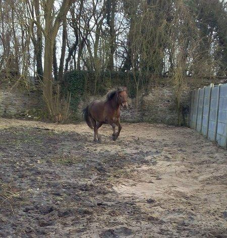 Le cheval a la perception comme il a la sensation, la comparaison et le souvenir ; il a donc le jugement et la mémoire, il a donc l'intelligence
