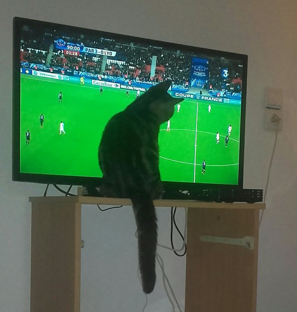Même mon fils suit le foot ?