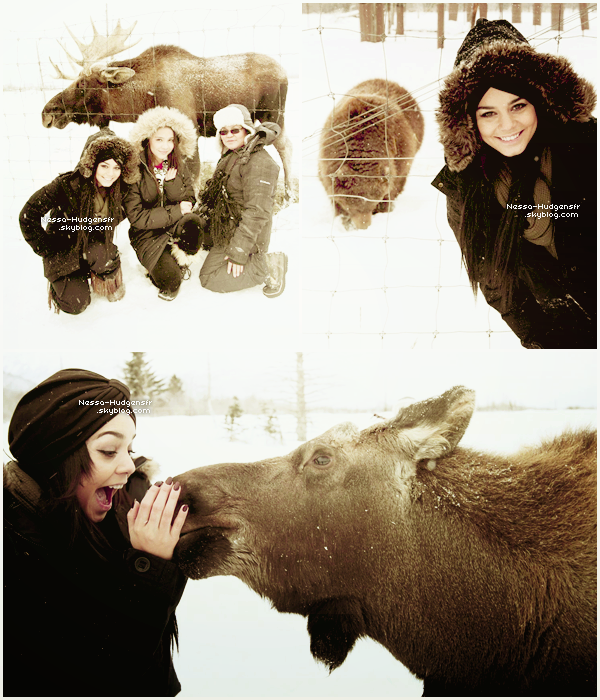 Voici 3 photos de la Famille Hudgens au The Alaska Wildlife Conservation Center. (Site ici)