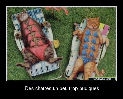 Chat pudique