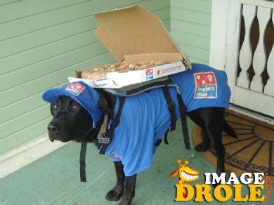 chien livreur de pizza