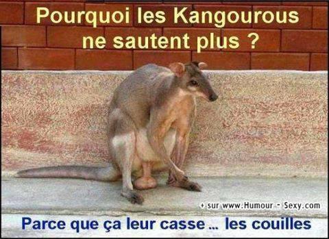 Pourquoi les kangourou ne sautent plus ?