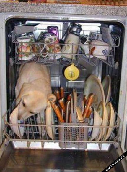comment laver sa vaisselle