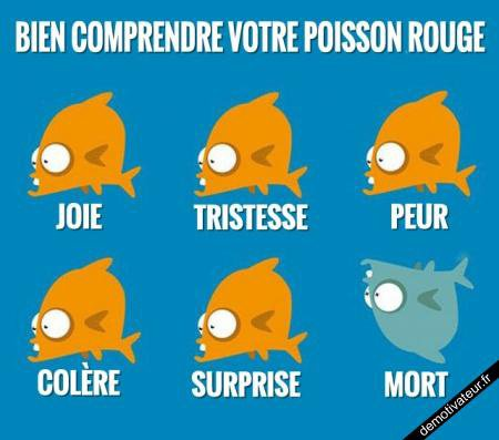 comprendre son poisson rouge