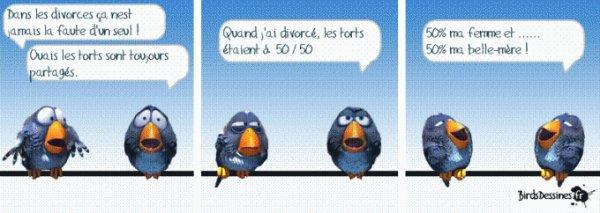 les birds dessinés ! le divorce