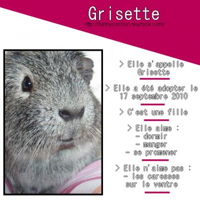 petite présentation en image de Grisette...