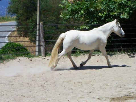 Les poneys !