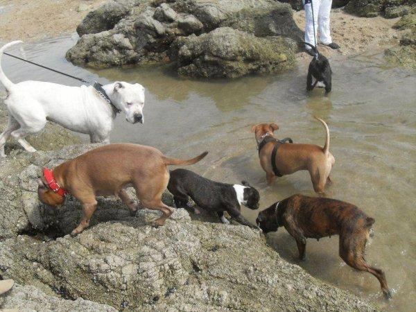 ballade au Croisic avril 2012 ;-) Aribo il adore ses nouveaux copains lol