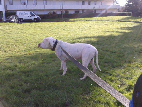 Aribo fevrier 2014, 70cm 65kg il a beaucoup grandi depuis ^^