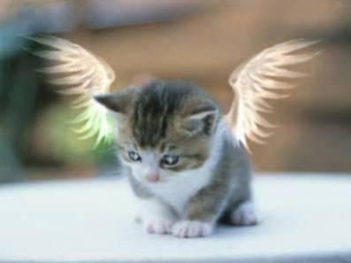 Urgence, SOS animal abandoné ! Nourir un animal abandoné en un clic !!!!!!!