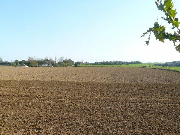 semis de blé devant chez moi