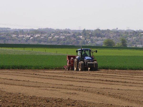 plantation des pommes de terre le samedi 12 mai 2012 avec New Holland TM 140 et télescopique JCB