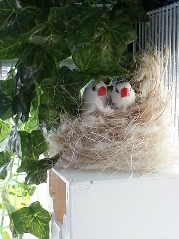 Mes titis faisant leur nid douillet