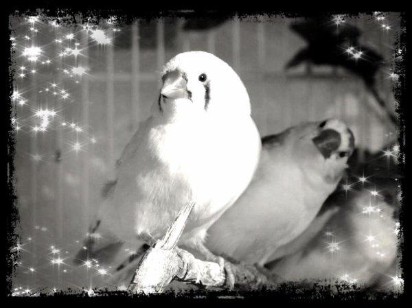 Mes pioux : Photos Noir et blanc