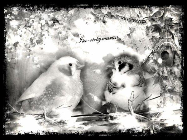 Suite : mes pioux : photos en Noir et blanc