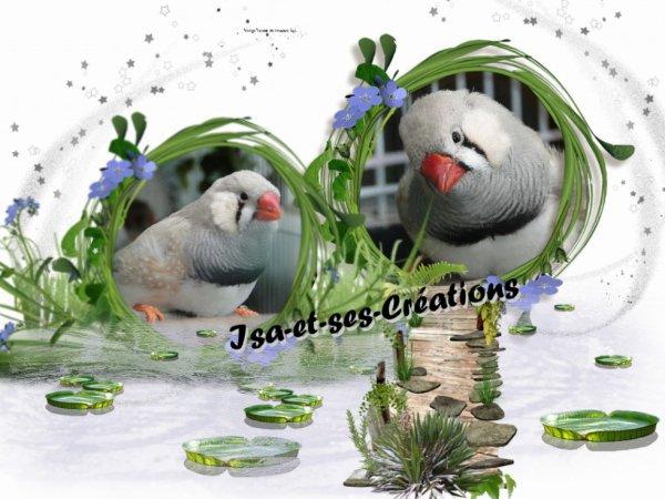 MES CREATIONS AVEC MES TITIS