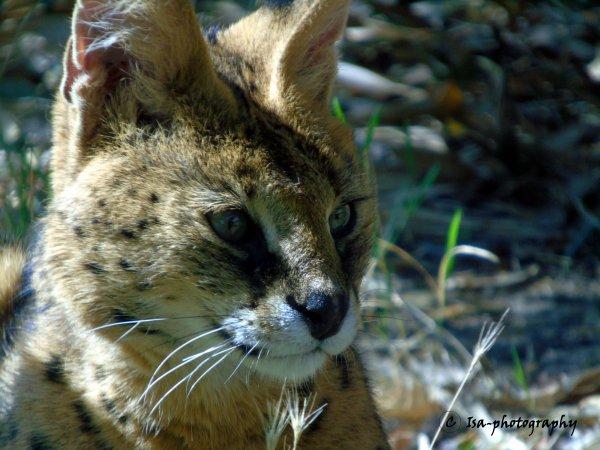 Quelques uns de mes clichés de ma visite au Zoo du Bois d'Attilly le 16/08/2018 par Isa