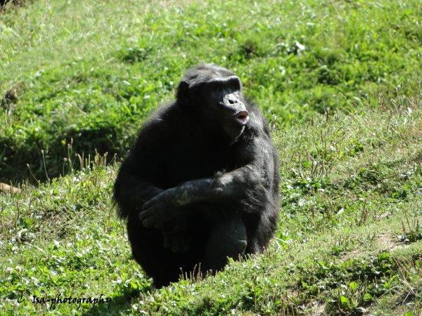 Suite : Quelques uns de mes clichés de ma visite au Zoo du Bois d'Attilly le 16/08/2018 - par Isa