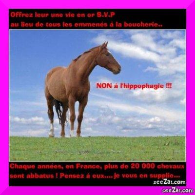 NON à l'hippophagie !!!