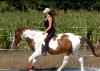 Horses-Dream56