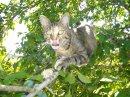 Photo de CatPattCentFamilles
