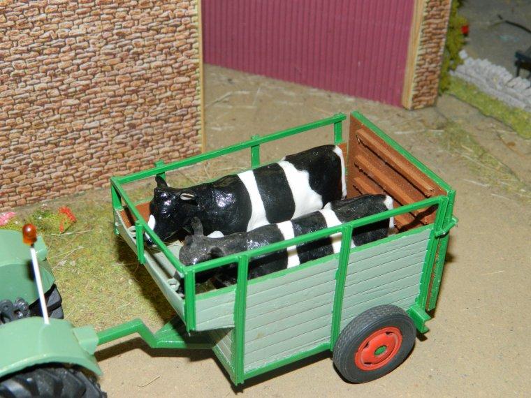 on rentre le vaches qui doivent vélée avec le favorit 4s