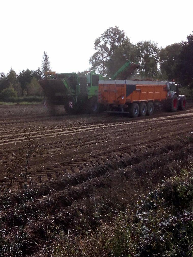 arrachage pommes de terres 2017