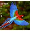 Design-Dream