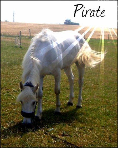 Pirate , ce merveilleux poney .