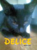 Photo de Delice-x3-Tuil