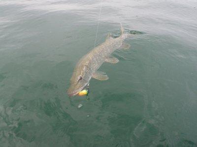 Pêche des carnassiers sur le lac de la liez