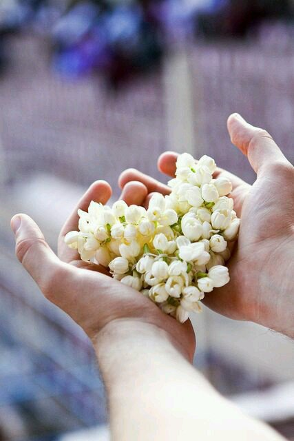 L'amour est une fleur qui pousse dans nos c½ur...