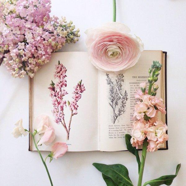 Les livres anciens ont le parfum des mots oubliés....