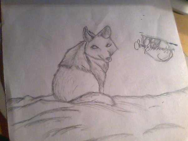 Pleins de mes dessins :)