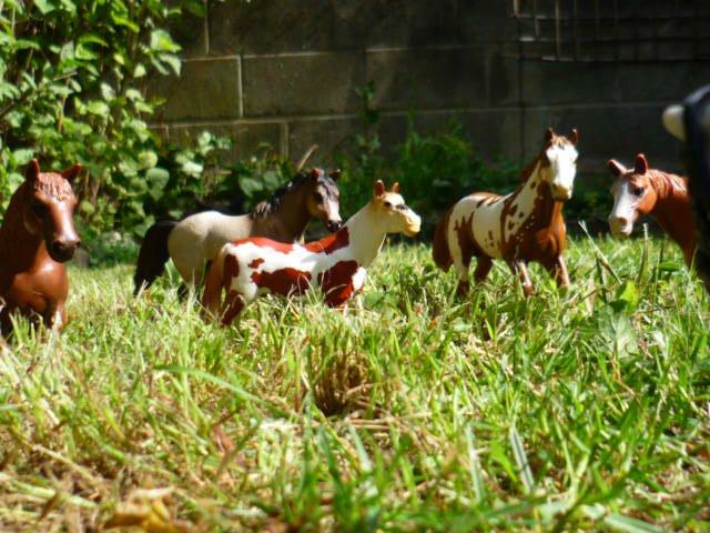 Découverte de chevaux tout du moins... Exotiques !