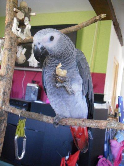 Mon petit plumeau...!!