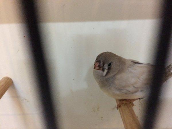 jeune femelle dos pale gris pastel