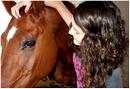 Photo de As-the-horse