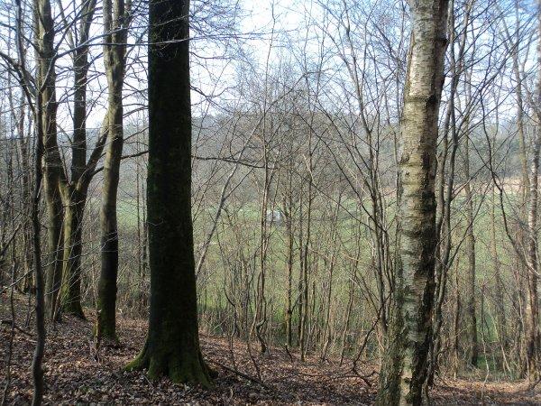 Sortie en forêt , mercredi 3 Avril 2013