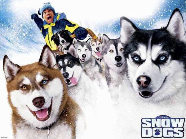 Critique no. 42 - Snow Dogs (Chiens des neiges)