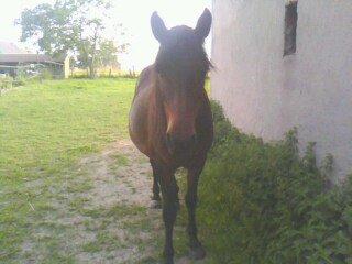 L'homme a besoin du cheval comme l'oiseau de ses ailes.. <3