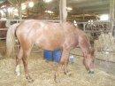 Photo de les-chevaux-et-mon-coeur